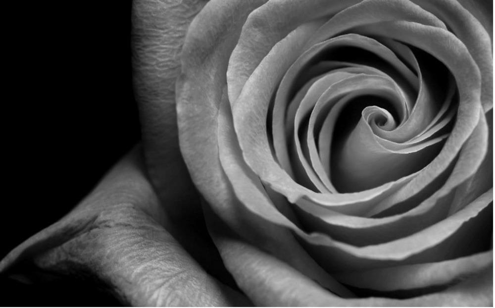 Rosa-blanco-y-negro-3d-papel-tapiz-de-flores-stereoecopic-wallpaper-papel-parede-mural-wallpaper-Decoraci&oacute